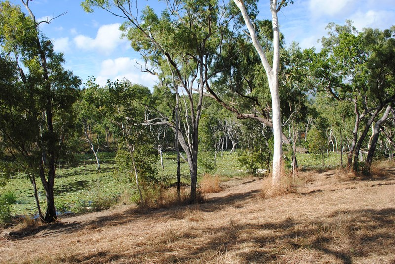 97 Rural & Farming Properties For Sale in Cooktown, QLD 4895