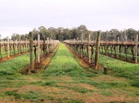 Well Established Vineyard TOOLAMBA VIC 3614