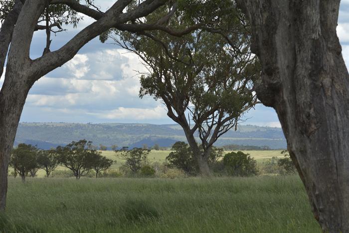 """White Rock"" BUNNAN NSW 2337"