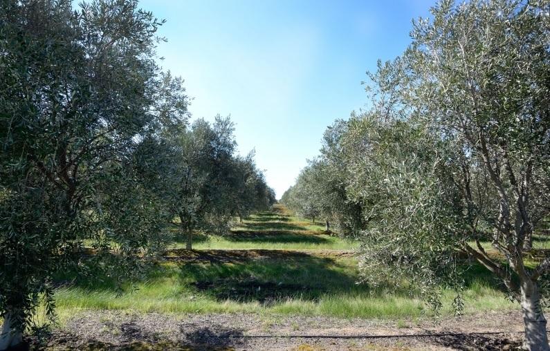 Wine/Olive Estate SUNBURY VIC 3429