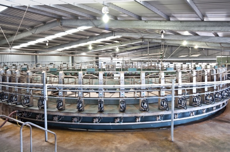 906 acre Dairy Farm with fully computerised dairy BYADUK VIC 3301