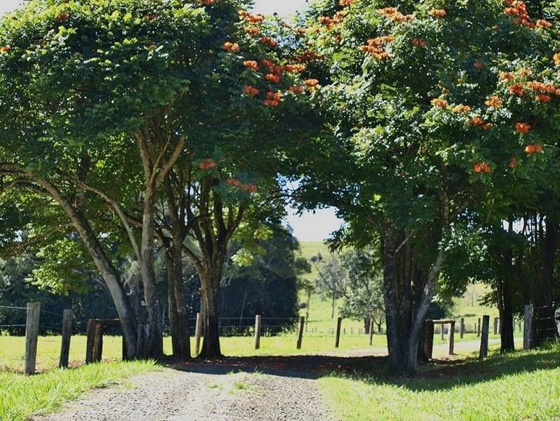 601 Old Palmerston Hwy MILLAA MILLAA QLD 4886