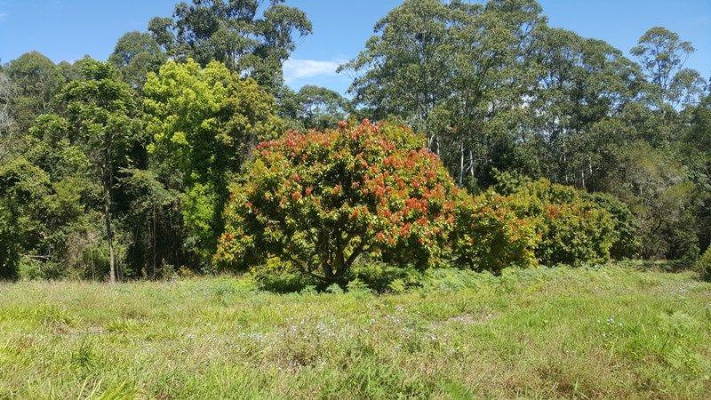 TYALGUM NSW 2484