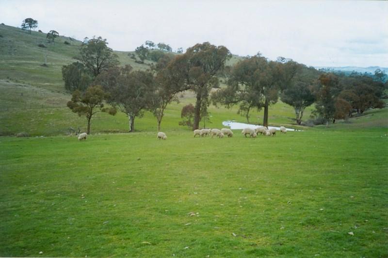 Lot 61 Greenmantle Road BIGGA NSW 2583