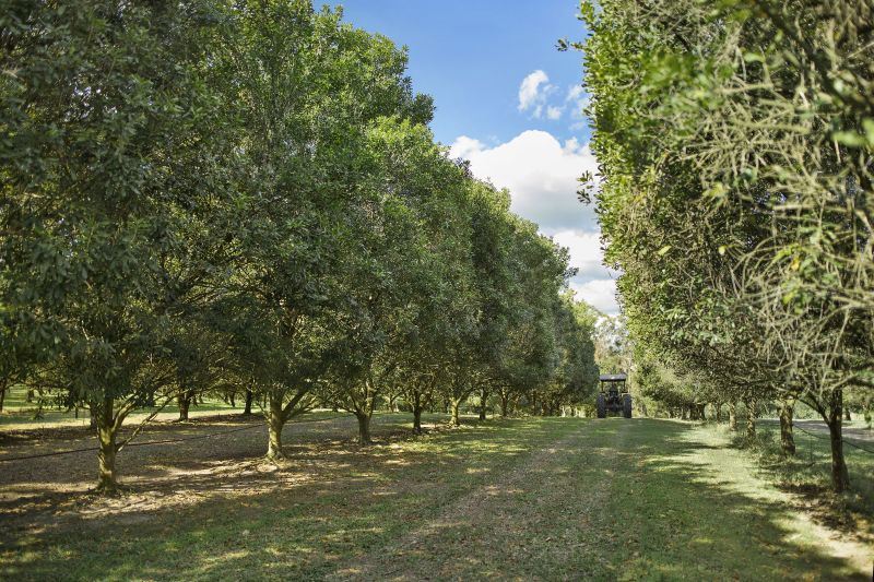 303 Lawson Road JONES HILL QLD 4570