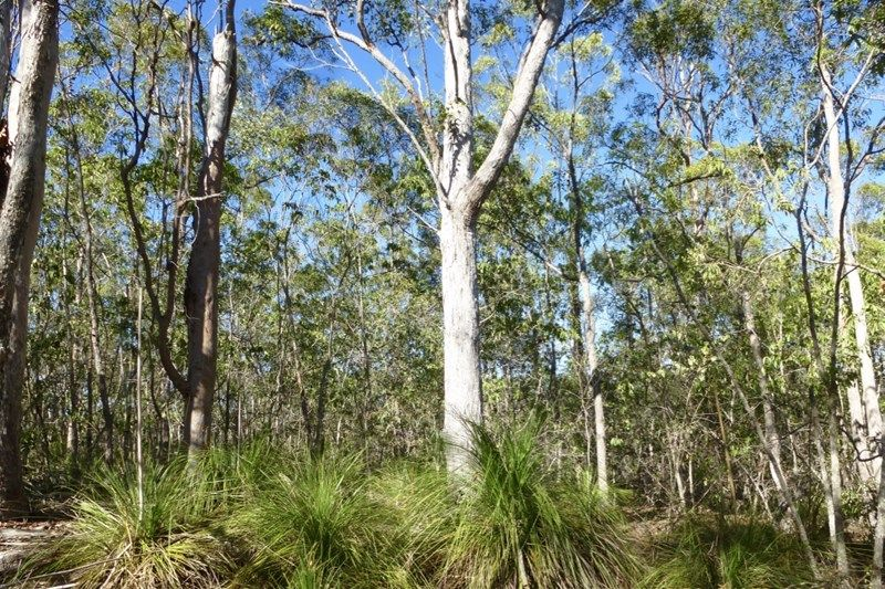Lot 47 Mineral Road ROSEDALE QLD 4674