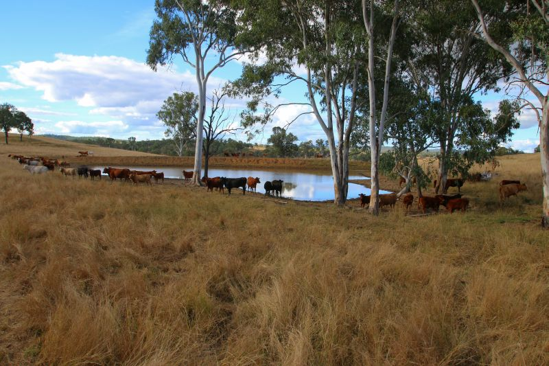 Lot 10 and 19 Bukali Scrub Road MONTO QLD 4630