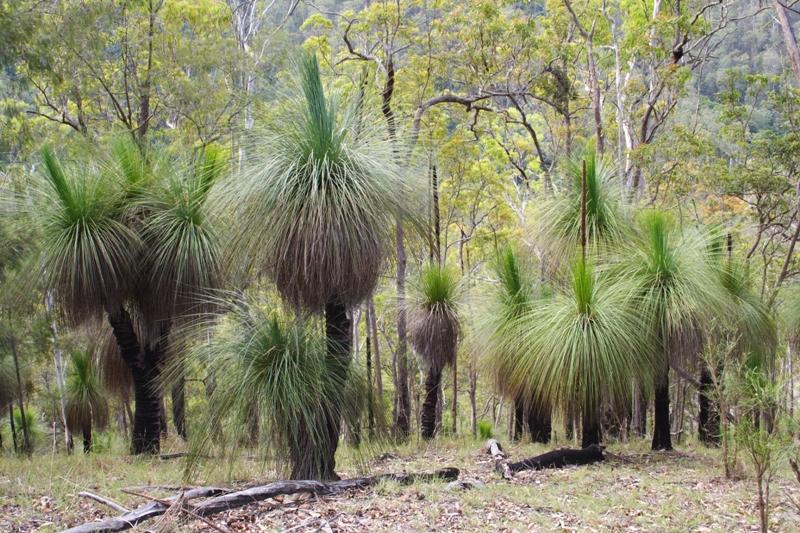 Lot 4 Armidale Road BELLBROOK NSW 2440