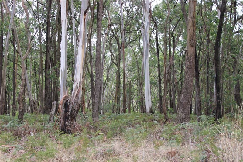 Lot52 F Bucks Road SCOTTS CREEK VIC 3267