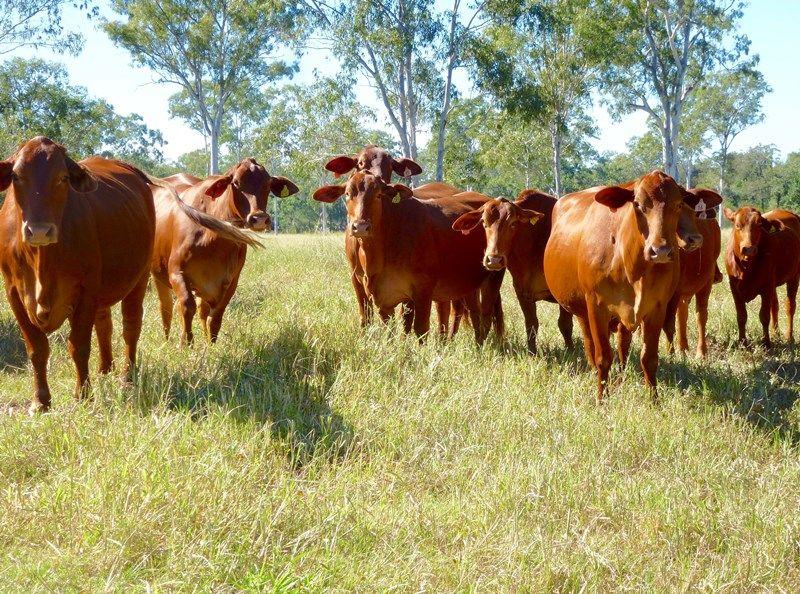 512 Dawson Road BERAJONDO QLD 4674