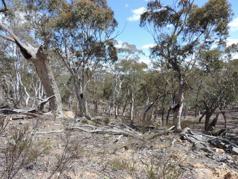 251 Nerrimunga Creek Road WINDELLAMA NSW 2580