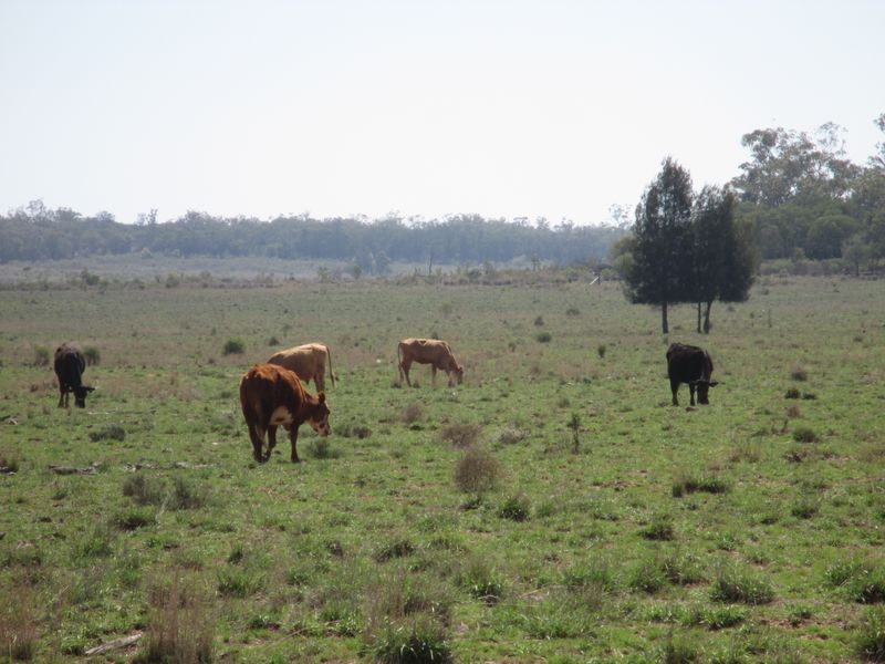 Silver Spring Road SURAT QLD 4417