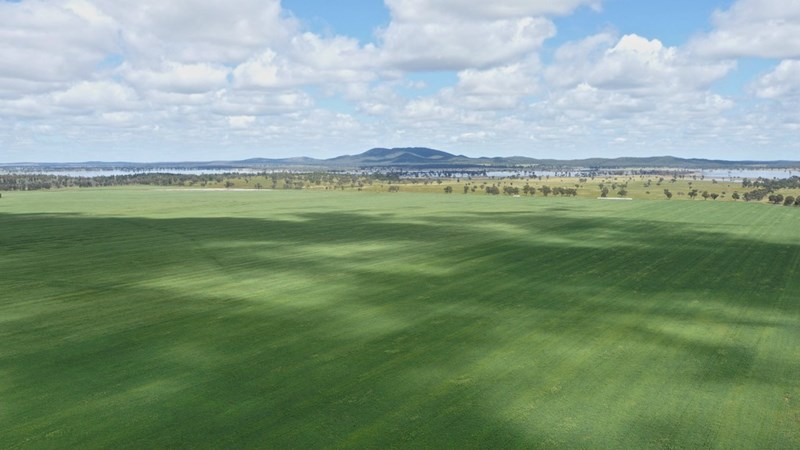 Burratoo Driftway Rd FORBES NSW 2871