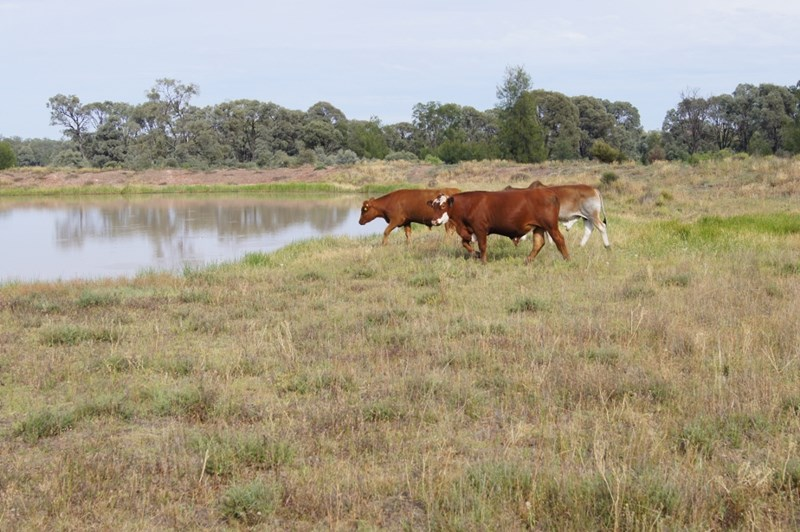 1043 ACRES BRIGALOW/BELAH TARA QLD 4421