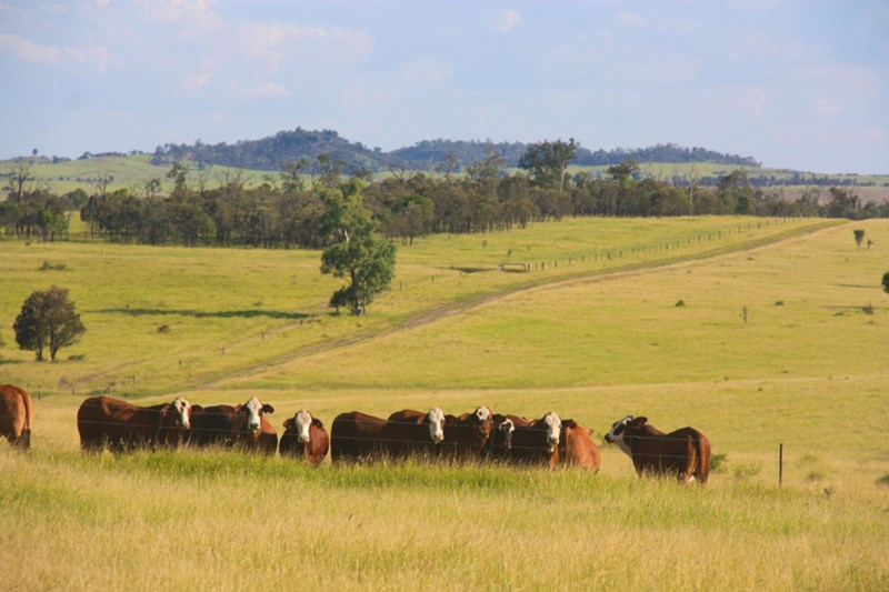 Meeleebee Downs ROMA QLD 4455