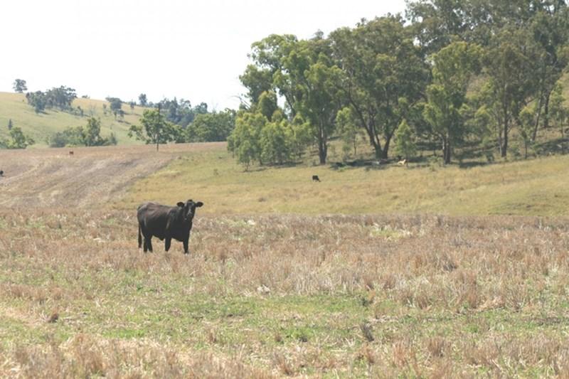 GRAMAN NSW 2360