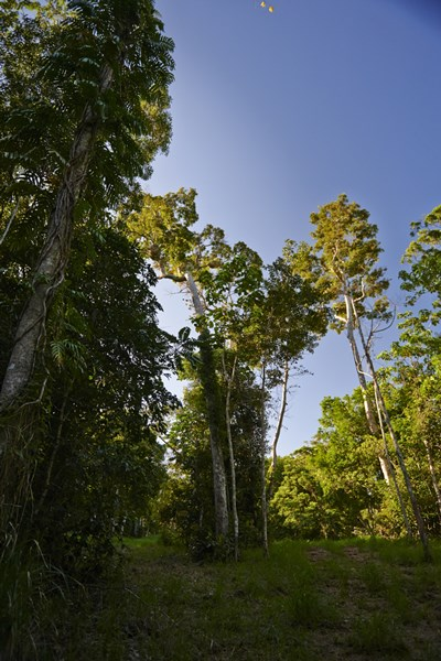 Lot 32 Aroona Street, Red Peak Forest Estate CARAVONICA QLD 4878