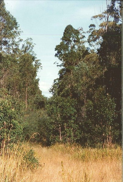 Lot 88 Bradley Road BLACKBUTT QLD 4306